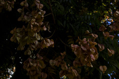 Become lost (christianzaldana) Tags: flowers beauty tree dying outdoor pink peachy