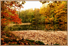 Goldener Herbst - Golden autumn (Karabelso) Tags: autumn fall leaves forest trees water nature color herbst laub wald wasser natur farben germany sachsen zwickau stadtwald panasonic gx7