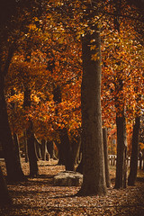 @FYABRIANSCOTT (fya_brianscott) Tags: nj nikon travel path light shadow rpad tree autumn leaves trees color colorful home world earth explore create change beauty beautiful