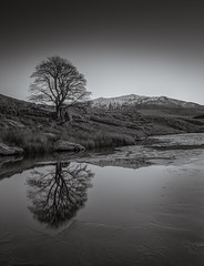 Cracking Up (TS446Photo) Tags: nikkor frost friends natura lens reflections tree mountain ice monochrome