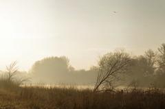 Thse-la-Romaine (Loir-et-Cher). (sybarite48) Tags: thselaromaine loiretcher france brume nebel mist   niebla  nebbia  mga nvoa  sis valle valley tal   valle  dal dolina vale  vadi leverdesoleil sunrise sonnenaufgang    alba  zonsopgang wschdsoca nascerdosol  gndoumu