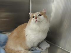 Tucker -  4.5 year old neutered male