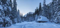 Dolina Roztoki (zthrx) Tags: poland mountains zakopane forest snow snowscape dolina roztoki