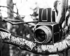 Hasselblad (brenkee) Tags: camera hasselblad film analog filmisnotdead buyfilmnotmegapixels largeformat lf 4x5 fourbyfive cambo mediumformat 6x6 foma ilford viewcamera monorail waistlevelviewfinder wlf