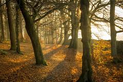 20161126-DSC_0029.jpg (nigel_hall) Tags: autumn sun sticks leaves red trees light rays country rural