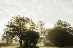 Lingen - Herbst_IMG_4373 (milanpaul) Tags: germany deutschland herbst sonne bume morgen lingen 2014 niedersachsen canoneos60d emsauenpark sigma1835mmf18dc