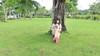 Cô gái tháng 10 (◦'⌣'◦ Demi Bunnie ◦'⌣'◦) Tags: sleeping grass sleep ilovegreen mỹ phú hưng demiipham demibunnie demi1310