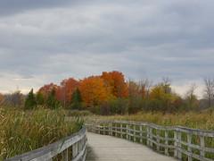 Parc Nature de l'ile Bizard (anng48) Tags: canada fall quebec montreal qc ilebizard parcnaturedelilebizard montrealntureparks