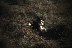 The Dunes (sharongellyroo) Tags: holga holidays norfolk bordercollie ki wintertononsea