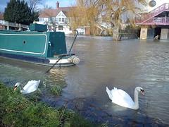 River Cam (Jane-Patricia) Tags: cambridge england river cam swans narrowboats