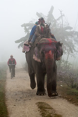 The elephant and the cyclist (Dick Verton) Tags: travel nepal elephant asia cyclist sauraha