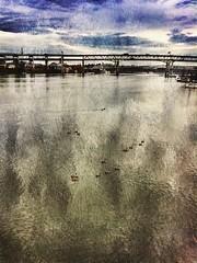 2014 Flickr Image - 292 (bob eddings) Tags: painterly oregon river portland bridges ducks pacificnorthwest pdx willamette textured eddings streetwalking 2014 bobeddings associatedpixels ipadprocessed iphone5s portlandoregonimages portlandoregonpictures