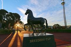 Breeders' Cup Glow (kimpossible pics) Tags: sky horse statue bronze clouds racetrack sunrise skies horseracing racehorse thoroughbred arcadia equine paddock santaanita santaanitaracetrack breederscup