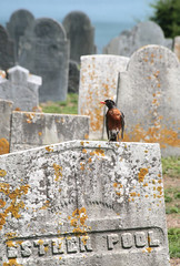Pool Robin (peterkelly) Tags: usa bird grave graveyard robin digital dead death us unitedstates massachusetts headstone unitedstatesofamerica tombstone gravestone northamerica lichen rockport capeann oldfirstparishburyingground