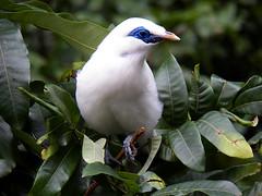 nEO_IMG_100_1544 (samuel_wkip) Tags: bird hongkong kodak central hongkongpark hongkongparkaviary kodakz990 z990 hongkongpark香港公園 hongkongparkaviary香港公園觀鳥園