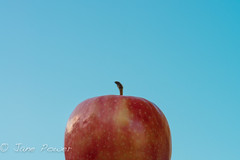 287- 365 (power_js) Tags: blue sky fruit spring bluesky apples d800 freshfruit nikond800