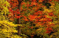 Fall Colours (1)