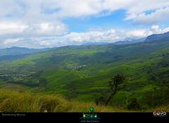 """""""INCREDIBLY GREEN KERALA"""" , Munnar in the morning. (GOPAN G. NAIR [ GOPS Creativ ]) Tags: india green tourism photography tea south kerala plantation greenery munnar gops gopan gopsorg gopangnair gopsphotography"""