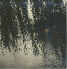 Day 1: Goose Pond Break (Triana T.) Tags: film polaroid sx70 polaroidweek impossibleproject