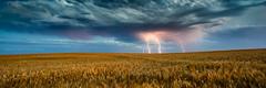 Lightning strikes over wheat crop, South Australia (Robert Lang Photography) Tags: wild storm color colour horizontal clouds danger australia stormy lightning southaustralia strikes eyre robertlang summerstorm lightningstorm eyrepeninsula coomunga robertlangphotography wwwrobertlangcomau