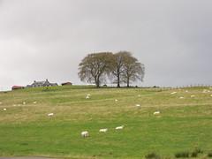 Hoish Farm (Vijay_ktyely) Tags: autumn scotland sheep farm hill hoish
