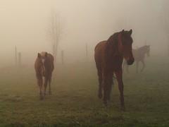 interessiert (bratispixl) Tags: germany licht oberbayern pferde schatten farben kirchberg morgennebel chiemgau lichtwechsel traunreut bratispixl belichtungsproben
