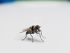 () Tags: fly voigtlander omd 25mm   em5