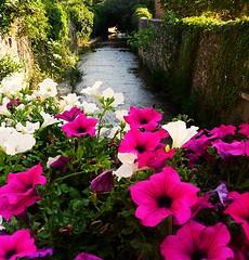 fiori sul fiume (emanuele fer) Tags: flowers italy river italia fiume fiori marche