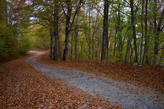 Off-road (stelioskvd) Tags: road autumn trees color fall leaves offroad path