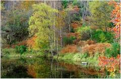 Autumn Tones (eric robb niven) Tags: autumn trees walking scotland dundee perthshire dunkeld birchtrees polneyloch ericrobbniven