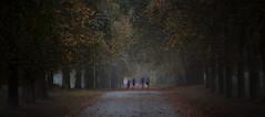 Parklife (explored) (yadrad) Tags: mist southwest leaves path centralpark plymouth devon