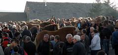 foire (sabine-43) Tags: chevaux hauteloire faysurlignon