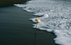 Nature (paola photos) Tags: light sea white nature water rose composition season t photography 50mm photo nikon october foto photographer feeling emotions luce scatto esuli scattifotografici