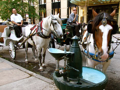 "Horse drinking from trough by sidewalk • <a style=""font-size:0.8em;"" href=""http://www.flickr.com/photos/34843984@N07/15516301966/"" target=""_blank"">View on Flickr</a>"