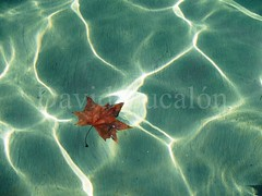 Floating (David Cucaln) Tags: life autumn art hoja water de leaf still agua fineart fine floating olympus otoo minimalist 2014 minimalista naturalezamuerta e510 flotando cucalon 1442mm davidcucalon