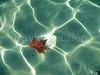 Floating (David Cucalón) Tags: life autumn art hoja water de leaf still agua fineart fine floating olympus otoño minimalist 2014 minimalista naturalezamuerta e510 flotando cucalon 1442mm davidcucalon