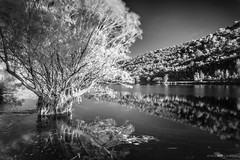 Lac infrarouge / Infrared lake (Laurent VALENCIA) Tags: trees blackandwhite reflection forest canon noiretblanc lac arbres infrared provence reflets fort hoya infrarouge carcs lacdecarcs dualiso
