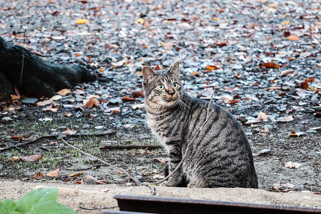 Today's Cat@2014-10-21