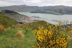 """Lyttelton • <a style=""""font-size:0.8em;"""" href=""""http://www.flickr.com/photos/27717602@N03/15584215111/"""" target=""""_blank"""">View on Flickr</a>"""