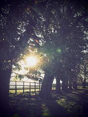 Autumn Afternoon (davepickettphotographer) Tags: uk travel autumn sun sunlight landscape photography afternoon olympus gb cambridgeshire huntingdon em1 olympuscamera huntingdonshire diddington