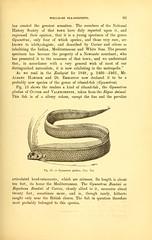 n112_w1150 (BioDivLibrary) Tags: halloween oarfish seaserpent smithsonianlibraries bhlmonstersrreal bhl:page=41617335 dc:identifier=httpbiodiversitylibraryorgpage41617335