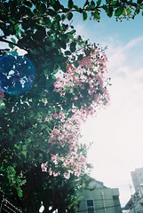 すべての写真-924 (eripope) Tags: flower film gr1s