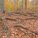 Autumn Avalon Trail - HDR