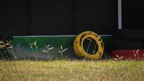 Bright Grass and Yellow Tyre