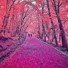 #закат #солнце #небеса #природа #Лето #люблюзакаты #краскилета #выходные #tramonto #mare #igworldclub #kuwait #uae #q8 #ksa #kuw #riodejaneiro #flores #trees #flowers #dark #colors #vienna #firenze #love (kseniya39) Tags: vienna flowers trees flores love colors riodejaneiro dark tramonto mare uae firenze kuwait q8 ksa закат природа солнце лето выходные kuw небеса igworldclub люблюзакаты краскилета