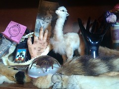 Curiosity Cabinet (Mungo_Crafts) Tags: flowers strange animal vintage fur spider weird hand cabinet teeth objects sage taxidermy collection bones curious dried collectible curiosities