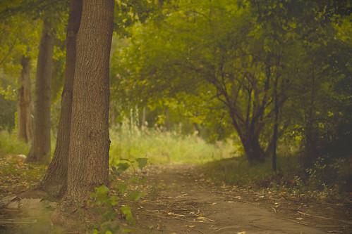 El Bosque Verde