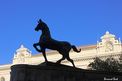 Le Cheval devant le Lyce Thiers (Bernard Bost) Tags: horse statue canon cheval marseille paca provence 2014 bouchesdurhne coursjulien