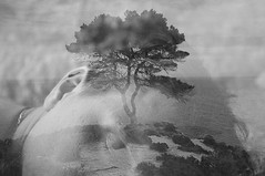 the rooted dream (Vasilis Amir) Tags: sea portrait blackandwhite tree monochrome collage landscape doubleexposure dream transparency transparent أمير