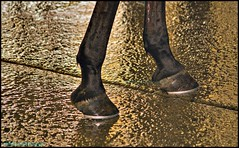 Walking on Gold (Beachhead Photography(Is in standby mode)) Tags: horse wet water gold floor line wash hoof hooves beachheadphotography